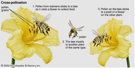 what kind of symbiotic relationship do bees and flowers have