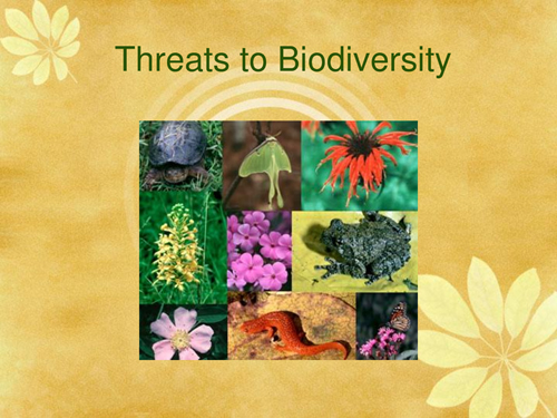 threats to biodiversity Biodiversity refers to all the different kinds of living organisms within a given area biodiversity includes plants, animals, fungi, and other living things biodiversity can include everything from towering redwood trees to tiny, single-cell algae that are impossible to see without a microscope.