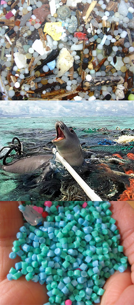 A World Without Plastic Switching To Biodegradable Material Greendustries Environmental