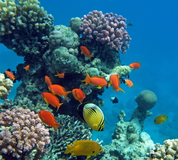 Why Are Coral Reefs So Important To The Biosphere